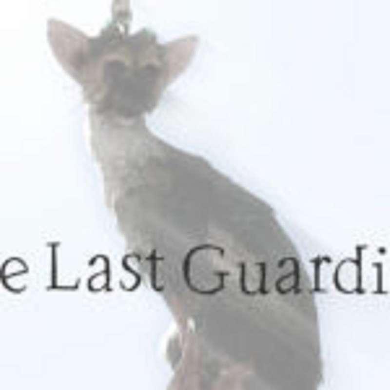 Trophy Guide The Last Guardian – Mein großer Freund